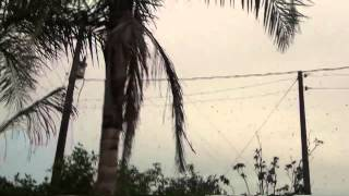 Fenomena alam yang aneh Hujan Laba-Laba DI brazill... Wow spider Rain!!!