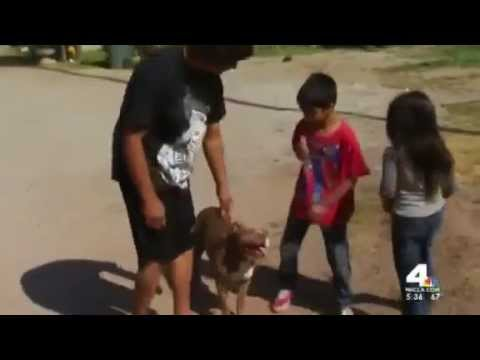Dog Calmly Playing With Kids After Cop Shoots Himself Trying To Kill it