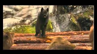 getlinkyoutube.com-Breaking Dawn Wolf Scene & Jacob leaves sam's pack ٩(͡๏̯͡๏)۶