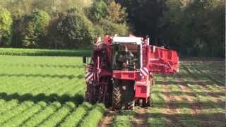 getlinkyoutube.com-Dewulf ZBII - 2-row self-propelled carrot harvester with bunker