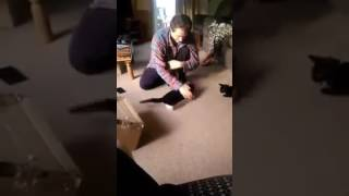 getlinkyoutube.com-Yoshi playing in boxes
