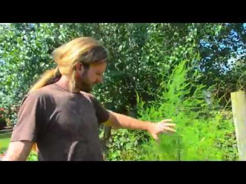 Quick Abundance in Organic Garden
