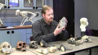 getlinkyoutube.com-The Minds of Stone Age Toolmakers