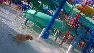 getlinkyoutube.com-Dog Poops in a Water Park (Super Pooper Sunday #37)