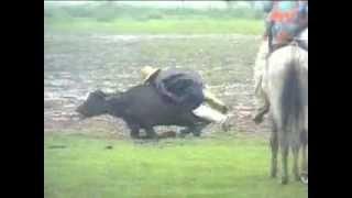 getlinkyoutube.com-Os místicos vaqueiros de Marajó