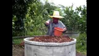 getlinkyoutube.com-การปลูกมะนาวในวงบ่อ โดยสวนเกษตรสามวา
