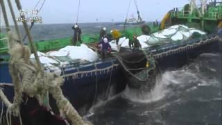 getlinkyoutube.com-한국기행 - Korea travel_바다의 명장들 1부 바다의 보리, 고등어_#001