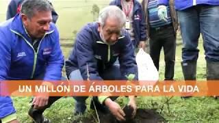 Le estamos cumpliendo a Pasto - millón árboles