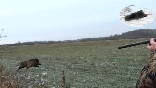 Best moments - November 2015 - driven hunt compilation - Drückjagd Beste Momente Chasse en battue
