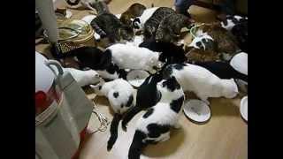 getlinkyoutube.com-猫家族の食事風景  Dining landscape of the cat family