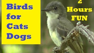 getlinkyoutube.com-Videos for Cats to Watch-Birds, Squirrels, and Rabbits,