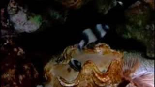 getlinkyoutube.com-My fish mating