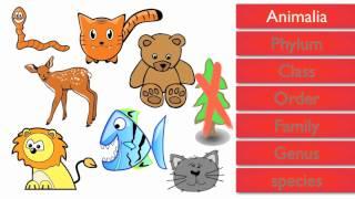 getlinkyoutube.com-Classification of Living Things