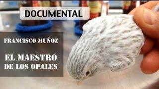 getlinkyoutube.com-Francisco Muñoz: El maestro de los canarios Opales