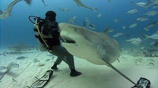 getlinkyoutube.com-Bull Sharks | JONATHAN BIRD'S BLUE WORLD