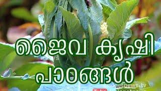 getlinkyoutube.com-Reghu Mash's organic farming | ജൈവ കൃഷി പാഠങ്ങള്