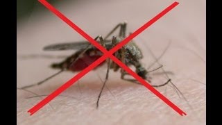 getlinkyoutube.com-REPELENTE NATURAL PARA MOSQUITOS /  REPELLENT NATIVE FOR MOSQUITOES