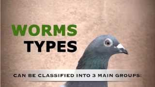 getlinkyoutube.com-Chap. 7 - How to keep our pigeons free of parasites (Worms). Mercasystems.com