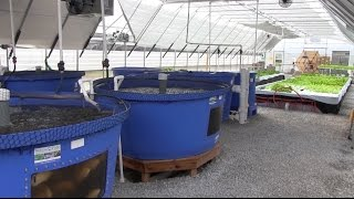 getlinkyoutube.com-Bluegrass Aquaponics - Midway, KY