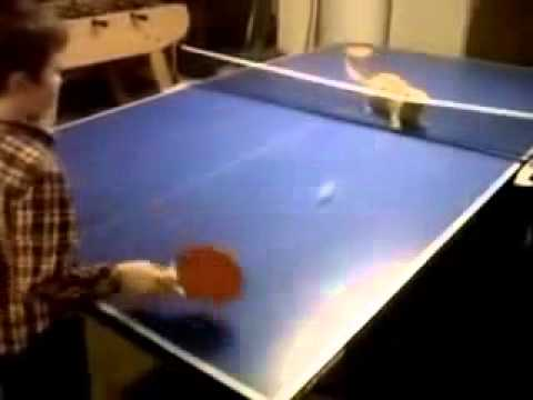 New Cat People Videos 2014 : Cat Plays Ping Pong