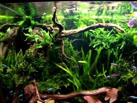 220 L Aquarium Amazone Look