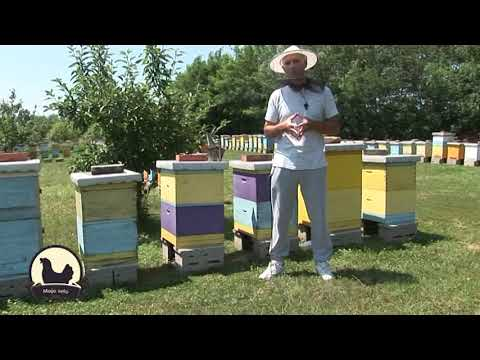 Iskustva profi pčelara - Letnji i zimski tretman protiv varoe organskim sredsvima