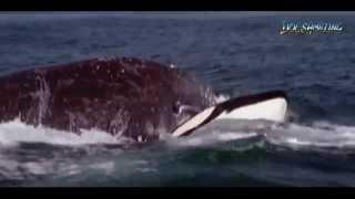 getlinkyoutube.com-I Predator: Killer Whale (COMPLETE) [HD]