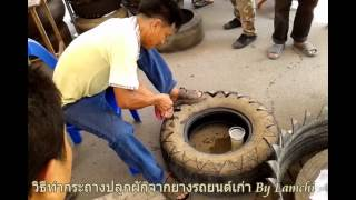 getlinkyoutube.com-[ฮักเกษตร]-วิธีทำกระถางปลูกผักจากยางรถยนต์เก่า