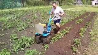 getlinkyoutube.com-Мотоблок Нева. Окучиваем картошку.