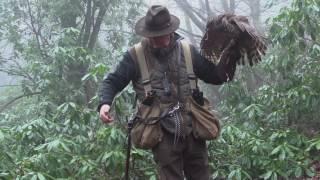Hunting with Goshawks in Essex
