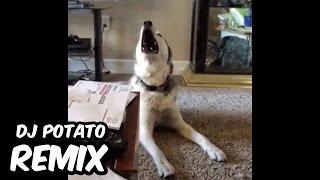 getlinkyoutube.com-Dimitri Vegas, Like Mike & Steve Aoki vs Ummet Ozcan - Melody (DJ Potato Remix)