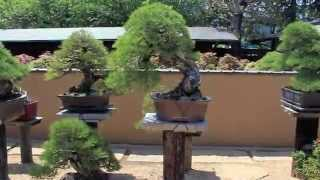 getlinkyoutube.com-Bonsai Scenes Japan .