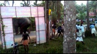 getlinkyoutube.com-eliphant attak varakara