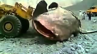 getlinkyoutube.com-огромная рыба