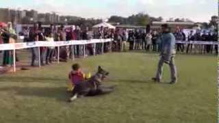 getlinkyoutube.com-German Shepherd Dog protects a baby