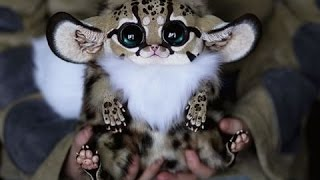 Super Cute Animals | Documentary 2015