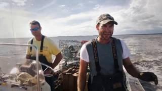 getlinkyoutube.com-Season of the Crab - BLUE CRABS Part 1