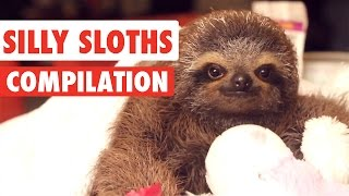 Silly Sloths Video Compilation 2017