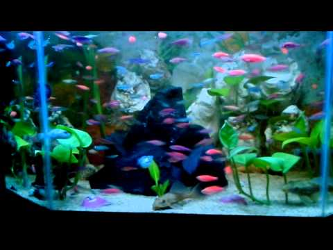Ikan hias air tawar 2014
