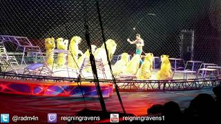 getlinkyoutube.com-Lions and Tigers! | Chicago Ringling Brothers Circus