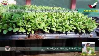 بالشرح جميع خطوات زراعة الجت بالزراعة المائية
