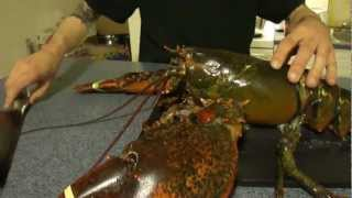 getlinkyoutube.com-S2-04 Pack A Lunch - Lobster 3 Ways, Baked, Beer-steamed, Boiled