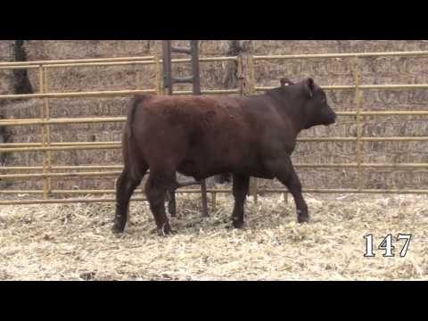 Beckton Red Angus 2014 Sale Lot 147