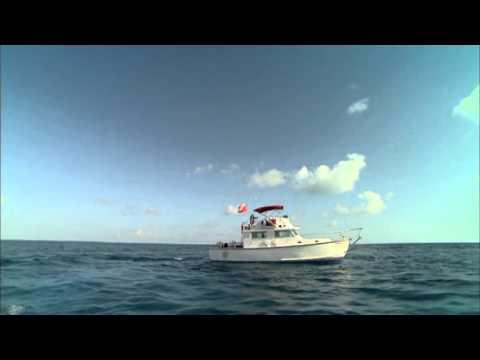 Treasure Divers Use Pulse 8X Metal Detector