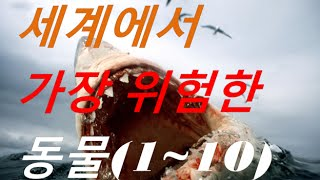 getlinkyoutube.com-세계에서 가장 위험한 동물(Top 1~10)/The most dangerous animals in the world (L.n.S)