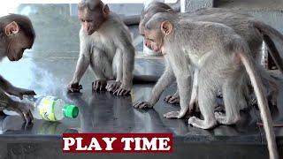 getlinkyoutube.com-Naughty Monkey Stole My Drinks Kodaikanal