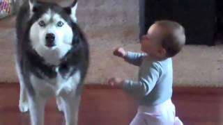 getlinkyoutube.com-หมา เถียงกับ เด็ก ฮาๆ