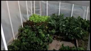 getlinkyoutube.com-A Backyard Greenhouse to Grow Food In Winter