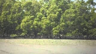 "getlinkyoutube.com-A short trip to Sundarban with ""Sundarban Tiger Safari"" - Part 3"