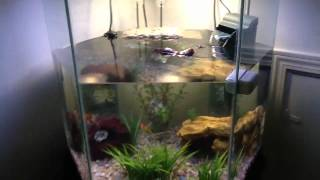 getlinkyoutube.com-My AWESOME turtle tank!!!